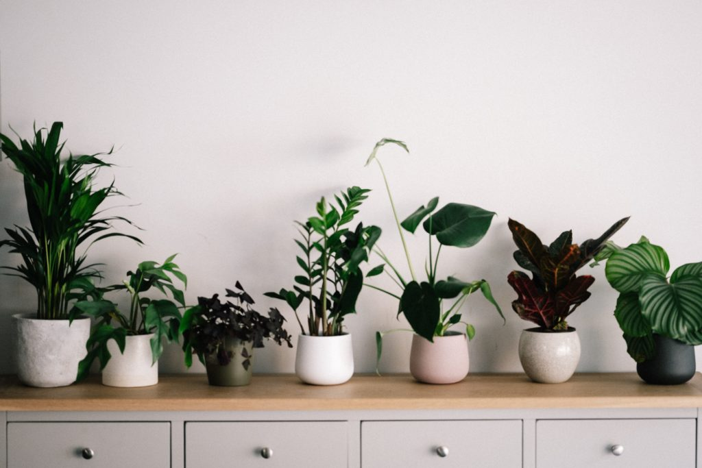 Purify the Air with Indoor Plants